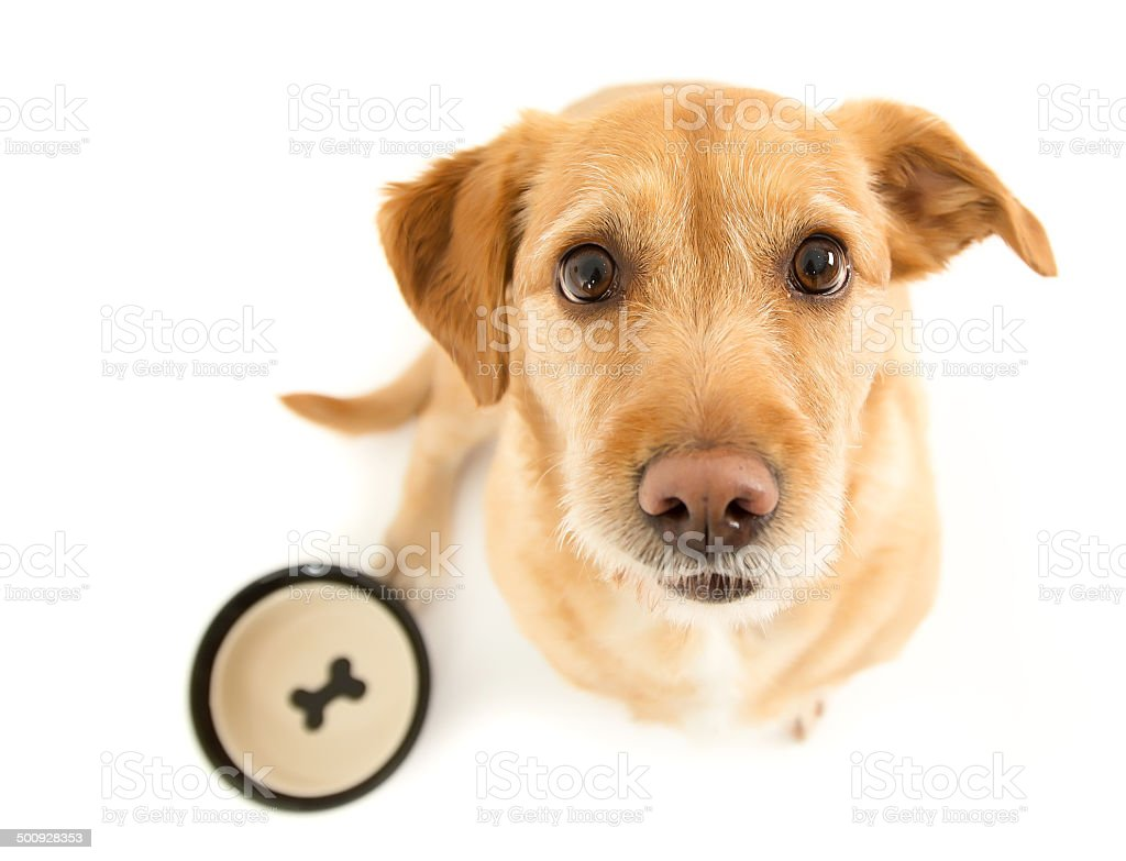 Hungry pup stock photo