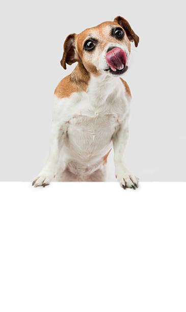 hungrig hund lecken - coole liebessprüche stock-fotos und bilder