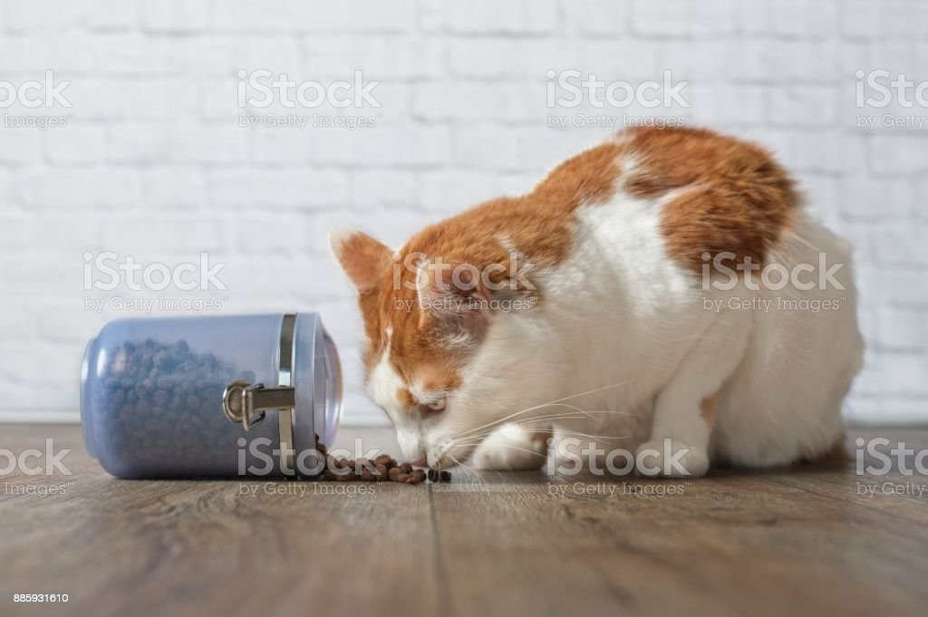 Hungry tabby cat stealing food from a food container stock photo