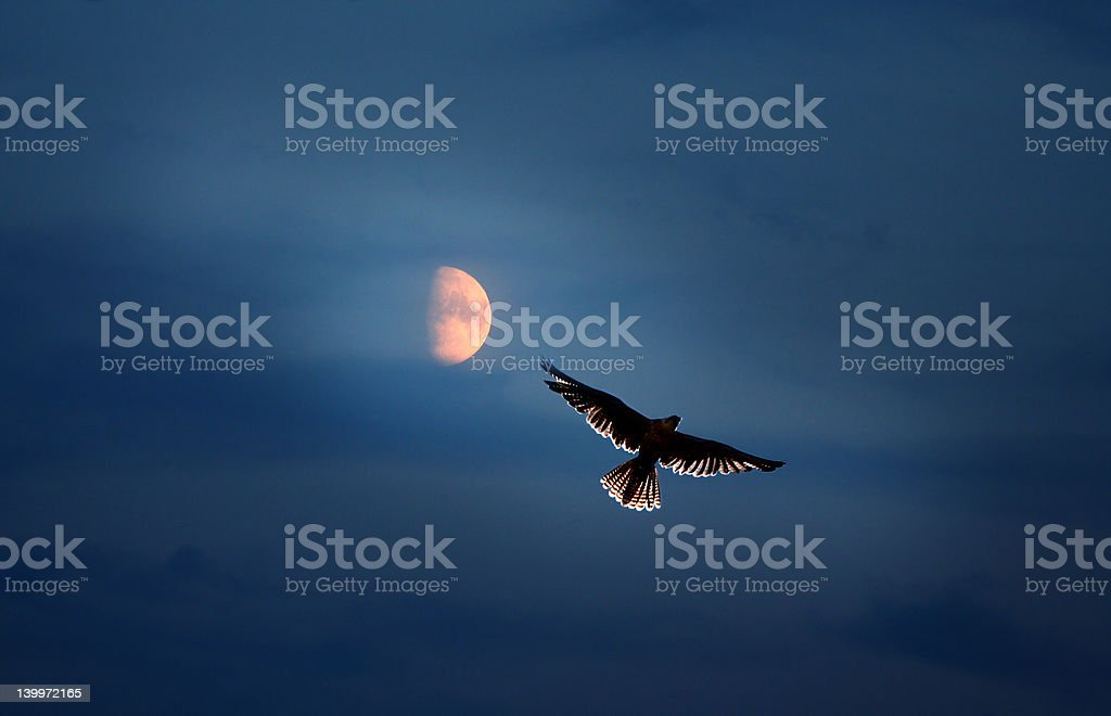 Hunt by light of the Moon stock photo