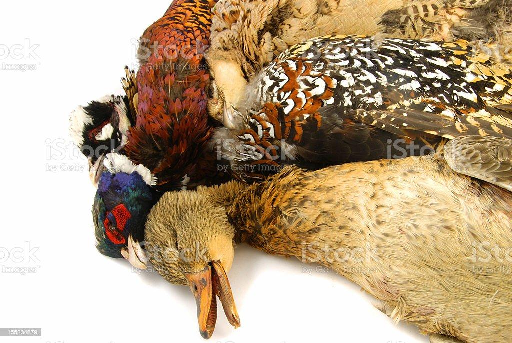 Hunted birds royalty-free stock photo