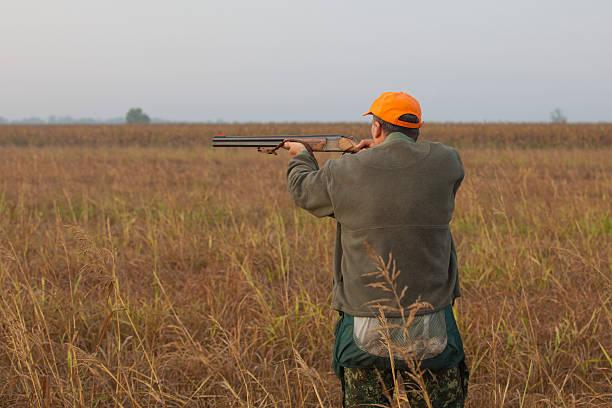 chasseur objectifs - faisan gibier à plume photos et images de collection