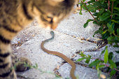 Hunter Cat Playing with a Small Snake