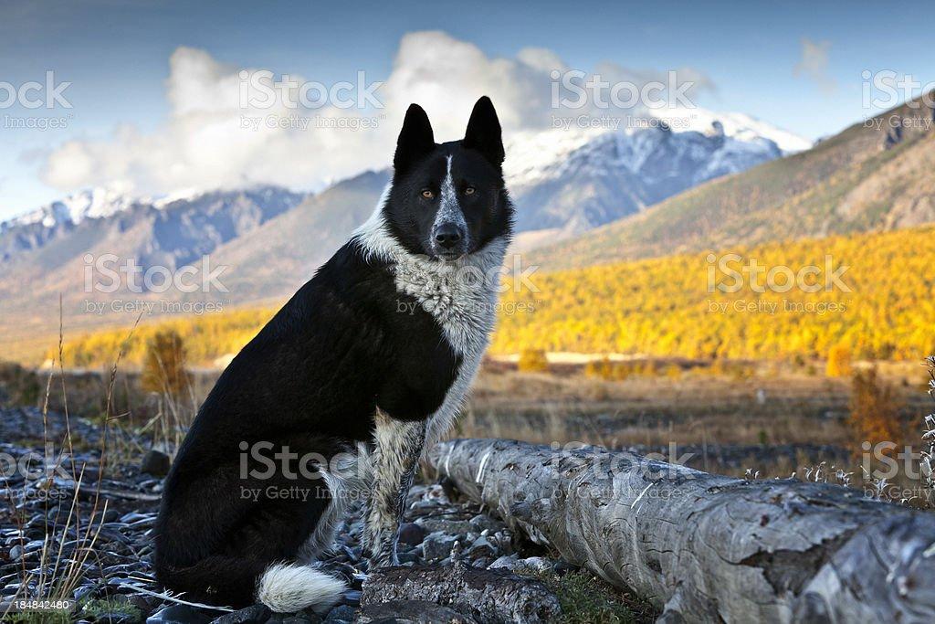 Hunter-Hund – Foto