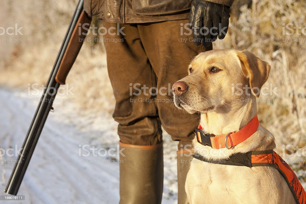 Hunter holding rifle with dog standing at attention stock photo