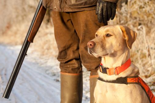 Jäger Mit Hund Stockfoto und mehr Bilder von Apportierhund