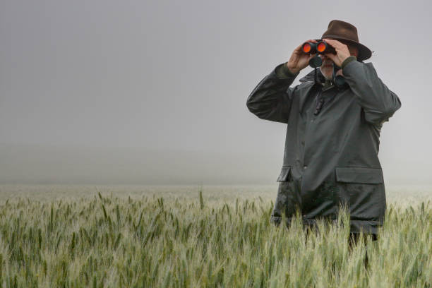 Hunter in fog stands in the wheat field and watches through binoculars. stock photo