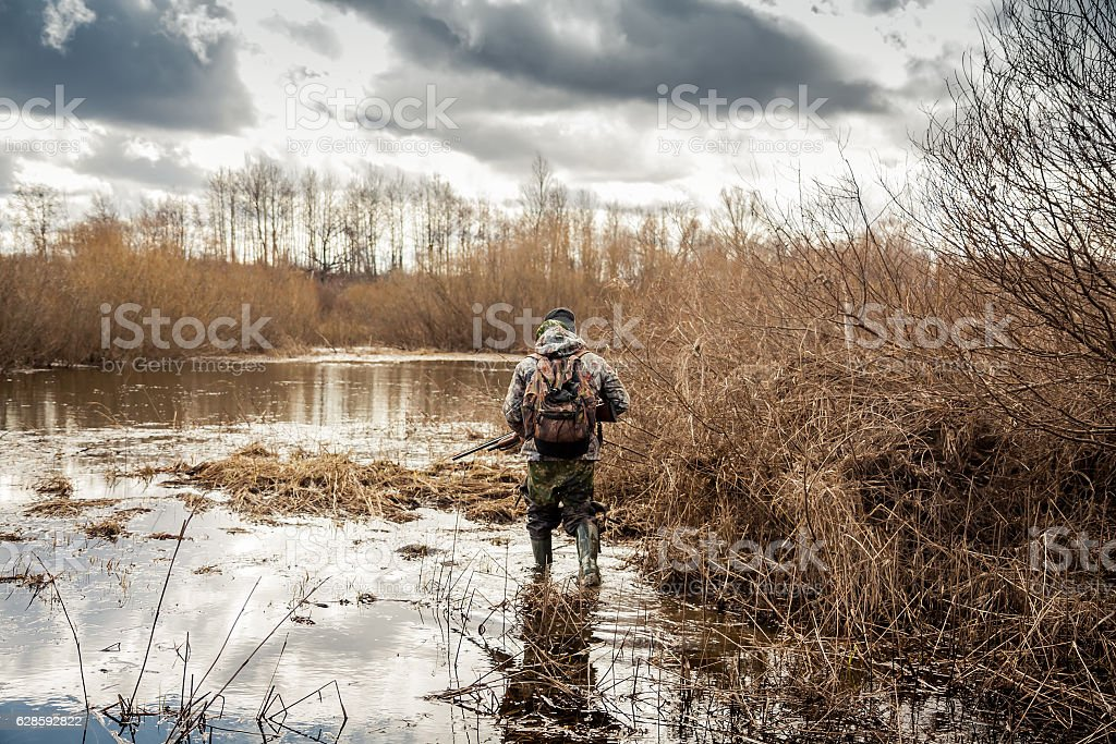 hunter man creeping in swamp during hunting period stock photo