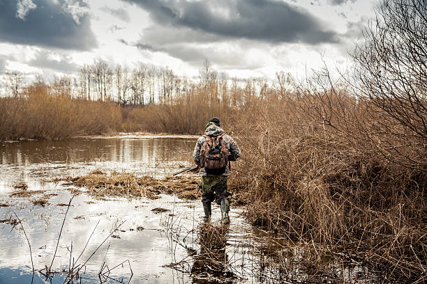 hunter man creeping in swamp during hunting period Hunter man in camouflage with shotgun exploring wetland area for prey during hunting period hunter stock pictures, royalty-free photos & images