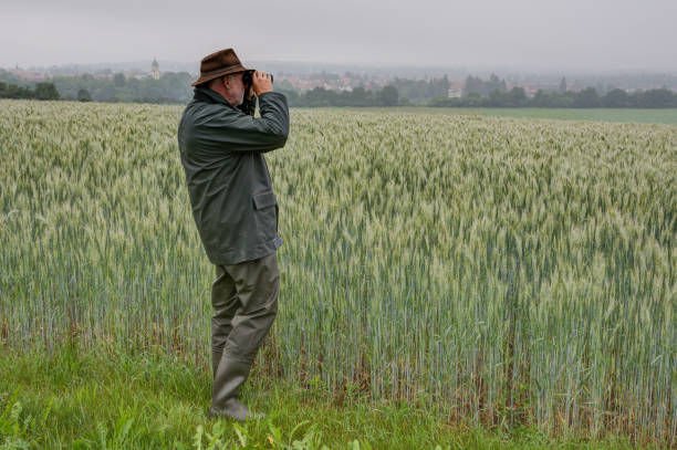 A hunter stands by a wheat field and observes his hunting area through binoculars on a rainy, foggy morning in June. stock photo