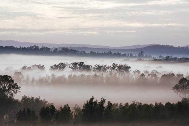 Hunter Valley Fog at Sunrise in Australia stock photo