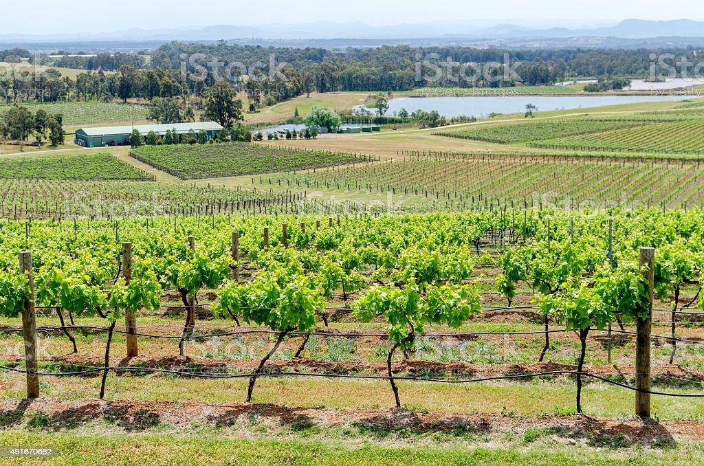 Hunter Valley Vineyard, Australia stock photo