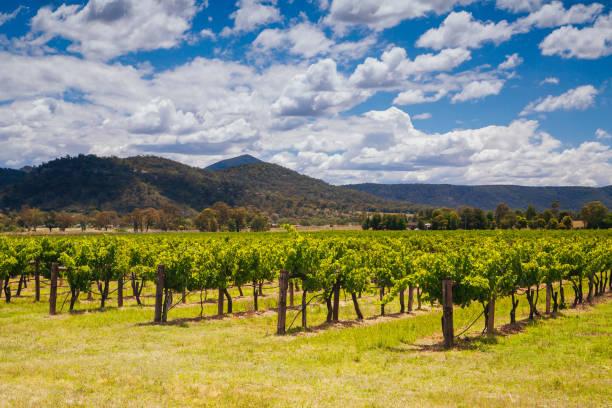 Hunter Valley Vineyard in Australia stock photo