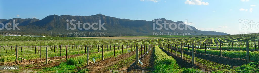 Hunter Valley, Vineyards on hillside Panorama, NSW Australia stock photo