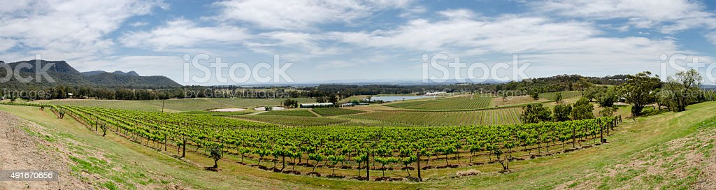 Hunter Valley Vineyards Panorama, Australia stock photo