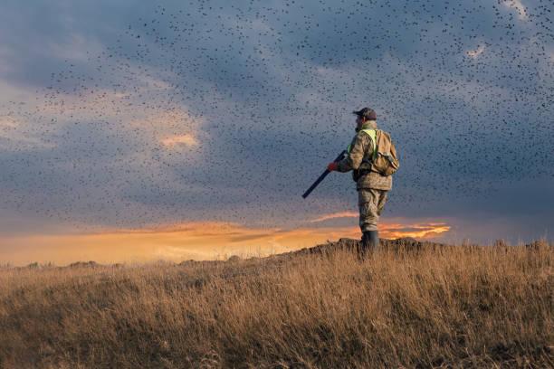 en jägare med pistol i händerna i jaktkläder i höstskogen på jakt efter en trofé. en man står med vapen. - rovdjur bildbanksfoton och bilder