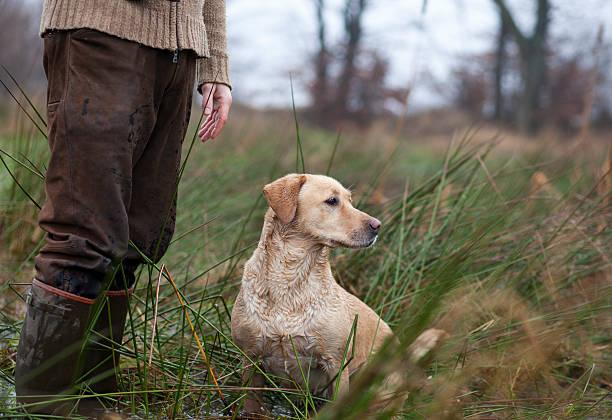 Hunter con un perro cazador - foto de stock