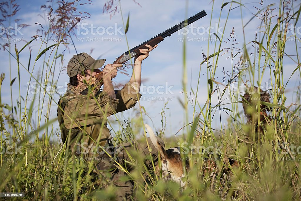 Hunter with hunting dog during a hunt stock photo