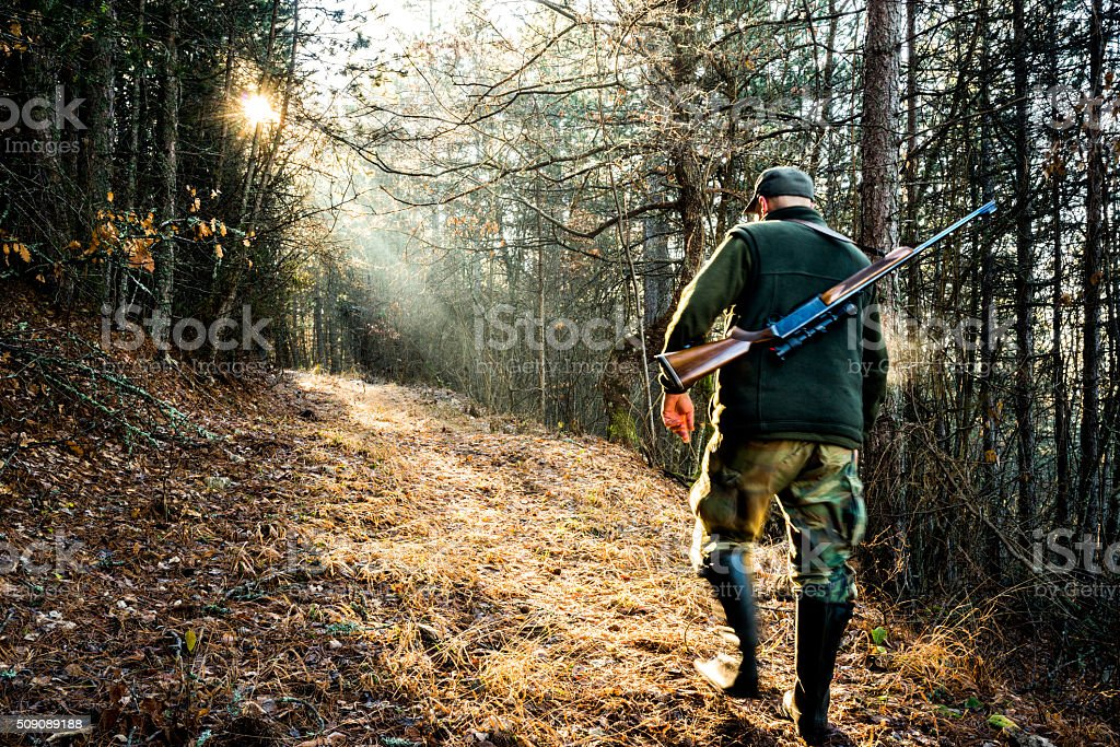 Hunter with rifle in the woods stock photo