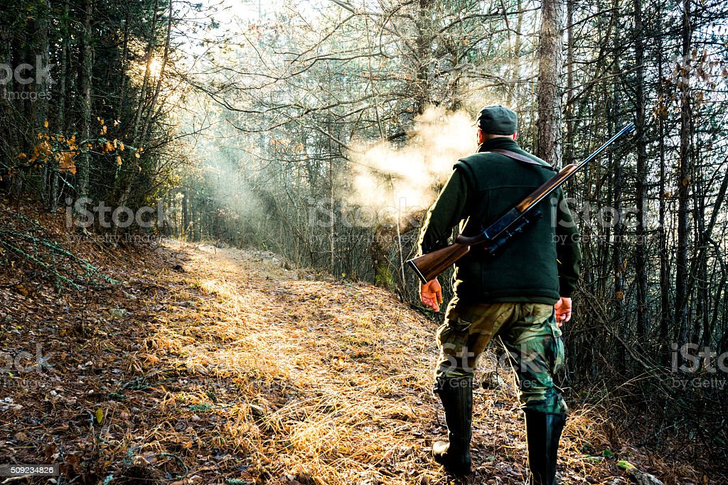 Hunter with rifle walking in the forest stock photo