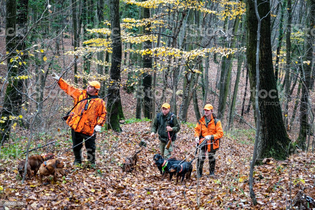 Hunters in the forest stock photo