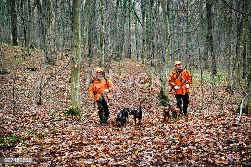 Hunters in the forest with rifles and dogs during the hunt of wild boars.