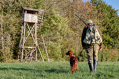 Hunter with backpack, rifle and his young Irish Setter Pointer walks across the meadow to his high hunting pulpit on the edge of a forest on a sunny afternoon in October.