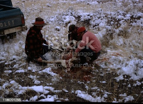 United States - January 01, 1970:  Hunters kneeling around a butchered deer carcass, one holding its legs, one taking out its entrails, by a pickup truck in a snowy field, Wyoming, 1970