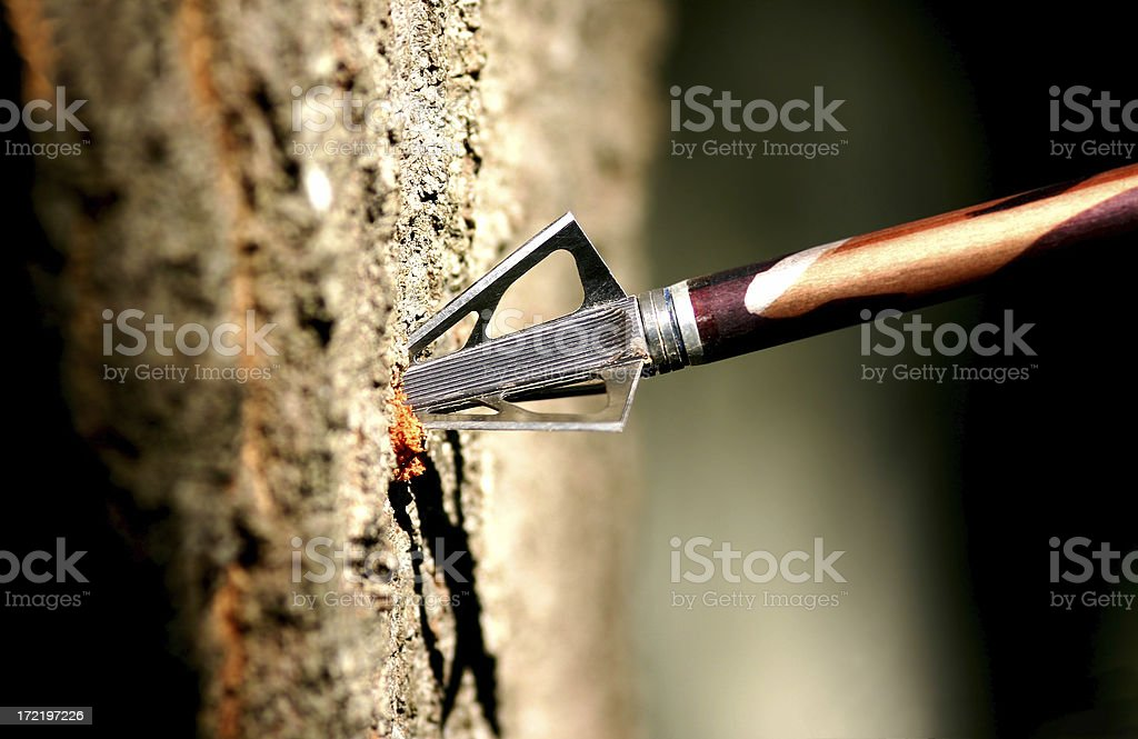Hunting Arrow in Tree stock photo