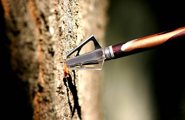 Hunting Arrow in Tree stock photo