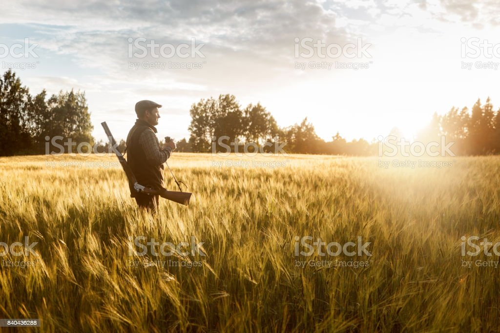 Hunting at golden hour stock photo