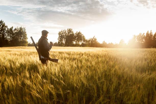 chasse à l'heure d'or - chasser photos et images de collection