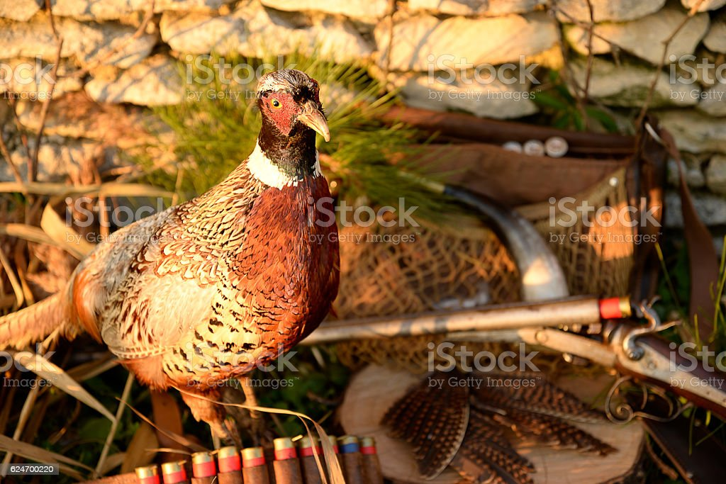 Hunting composition with pheasant, rifle and hunting equipment stock photo