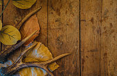 deer antlers and autumn leaves on beautiful vintage wooden background with copy space