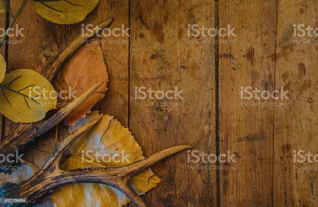 Hunting concept with deer antlers stock photo