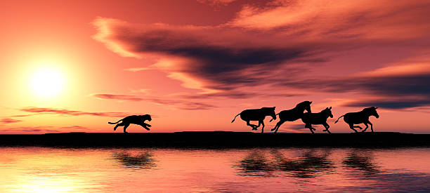 Hunting cougar picture id146792645?b=1&k=6&m=146792645&s=612x612&w=0&h=psa zlxlpbiqxxjrt phxrk8nkpuxlkdwpw5zwray10=