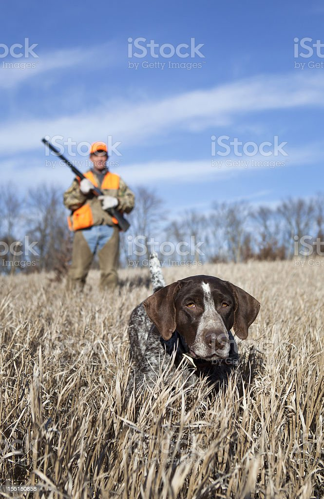 Hunting Dog and Man Upland Bird Hunting in Midwest Field. stock photo