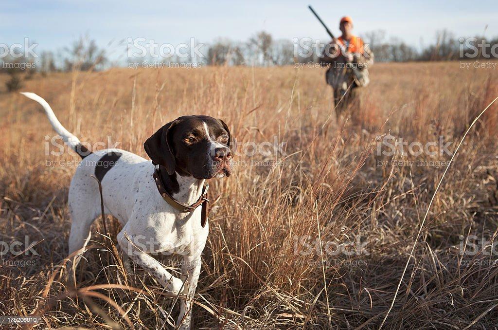 Perro cazador y hombre Upland caza de pájaros en el campo de la región central de los Estados Unidos. - foto de stock