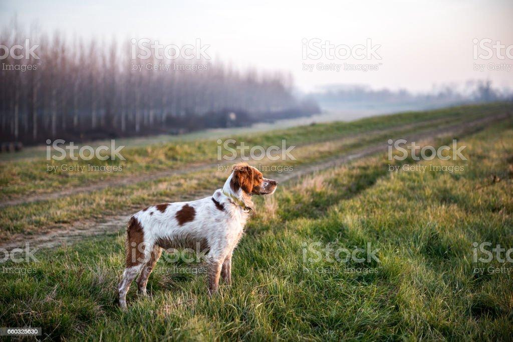 Perro cazador - foto de stock