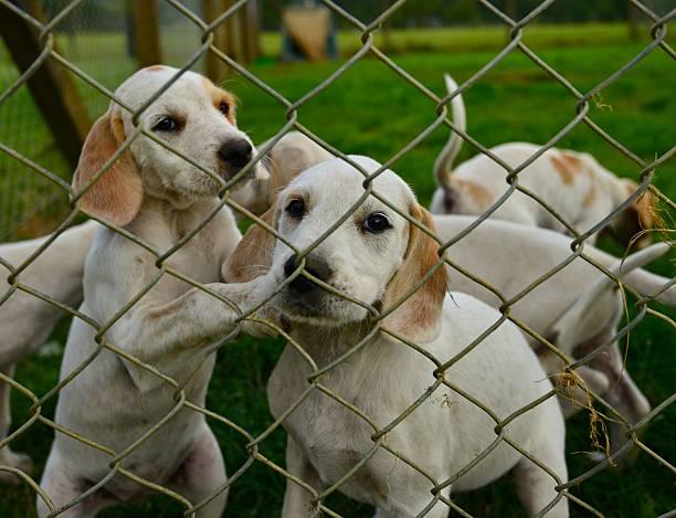 hunting hunde in einem käfig sein - sinnvolle wörter stock-fotos und bilder