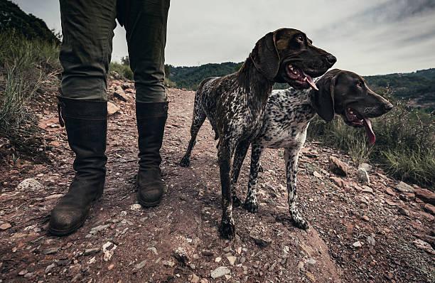 Caza de perros - foto de stock