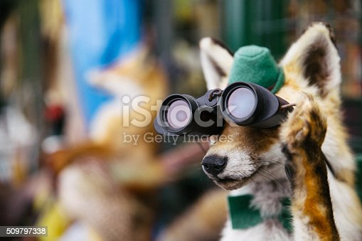 Close-up of an old stuffed fox, dressed as a hunter, using binoculars to look away.