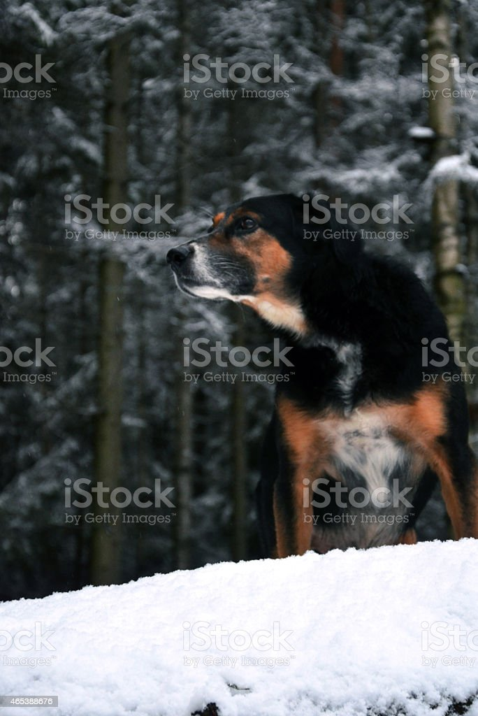 hunting in forest stock photo