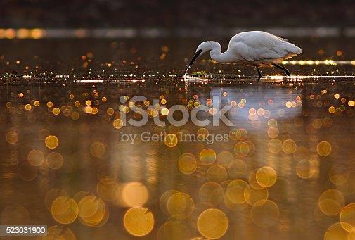 The little egret in beautiful bokeh pond.