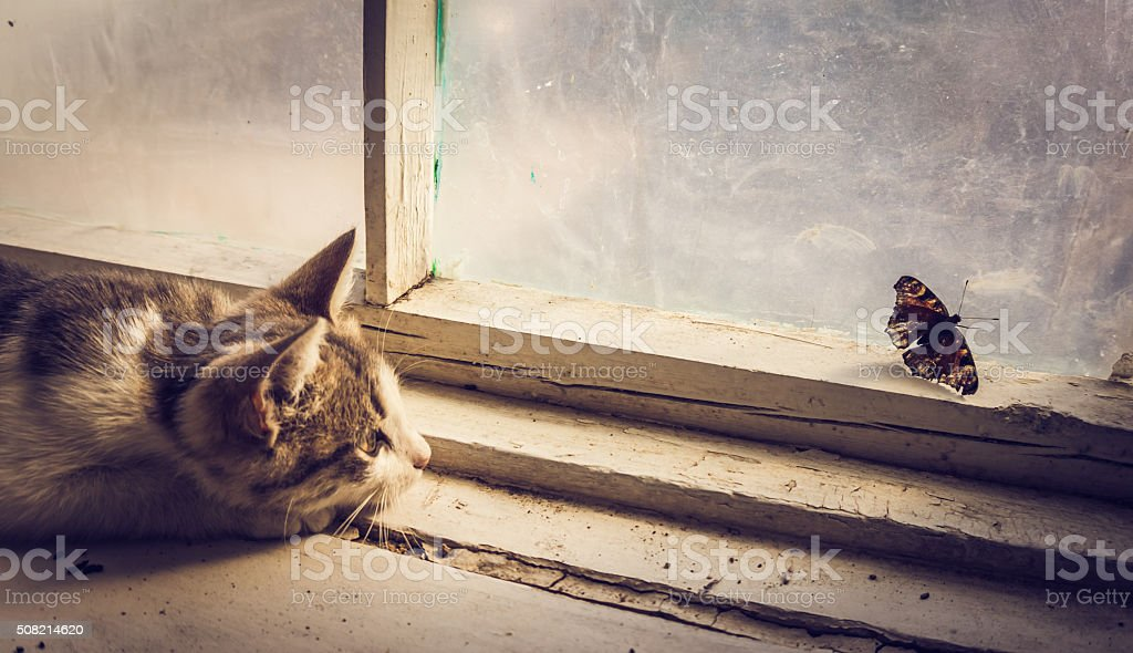 Hunting instinct in action stock photo