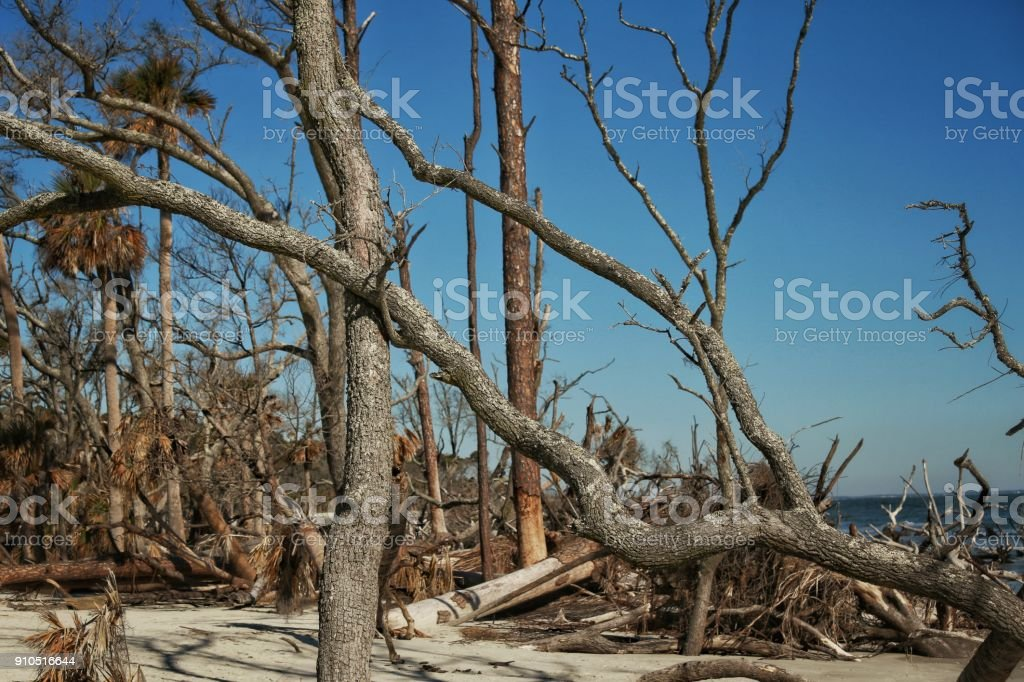 Hunting Island State Beach Eroding Coast Fallen Tree Roots Sc Stock Photo -  Download Image Now