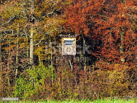 istock Hunting lookout 529993504