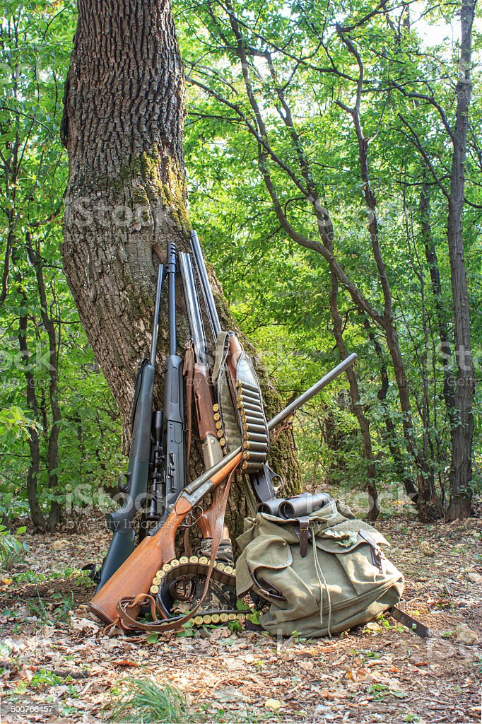 Hunting rifles and accessories backed against a tree in a forest royalty-free stock photo