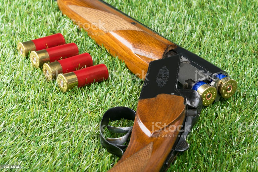 hunting Rouge lying on the grass with red cartridges stock photo