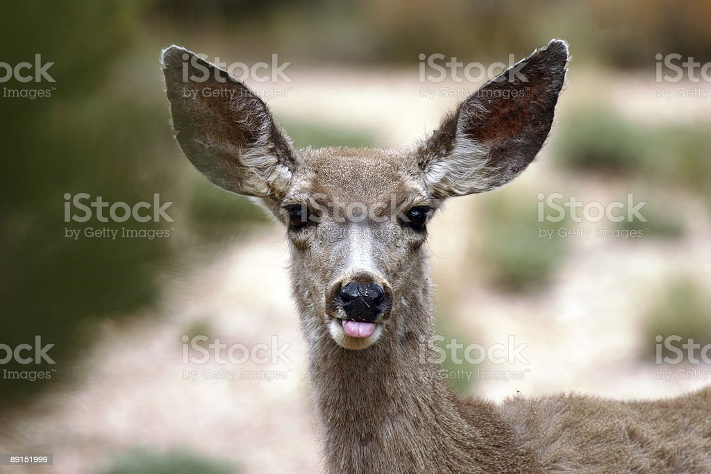 'NOT' Hunting season royalty-free stock photo